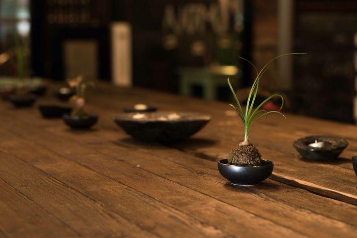 Nolina recurvata on the table