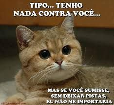 Resultado De Imagem Para Urso Frases Boa Humor Funny E Jokes