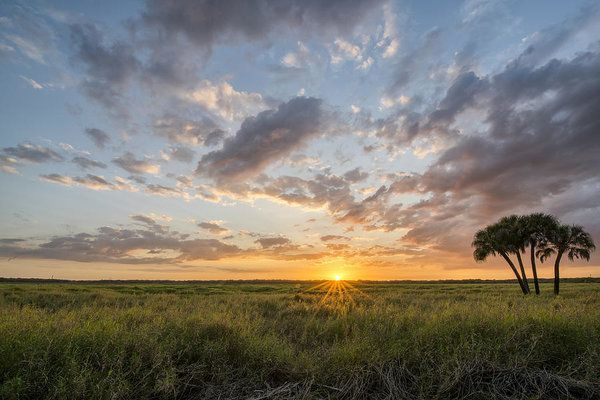Photographed at Myakka state park just as the sun was setting. The sun crept thru the clouds beaming rays of light on the grassland. #photography #tree #florida #homedecor