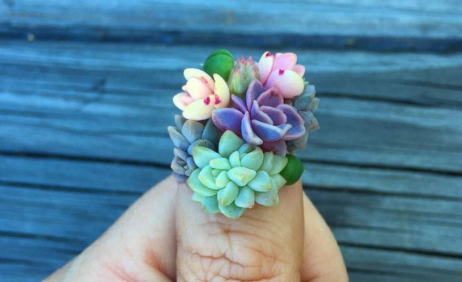 """You Can Now Grow Tiny Plants on Your Fingers Thank to """"Succulent Nails""""  -We can't help but wonder: how would you do the dishes?"""