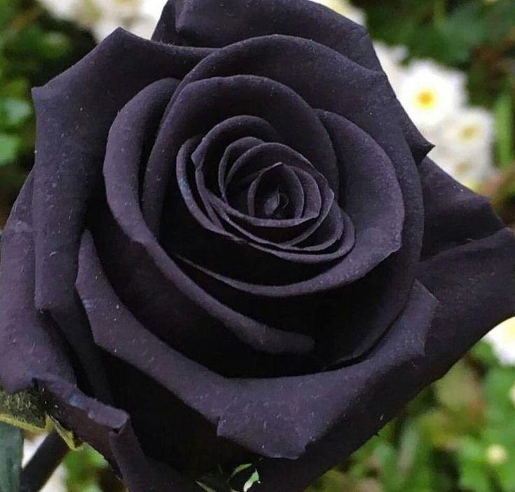Pin On Beauty Flowers
