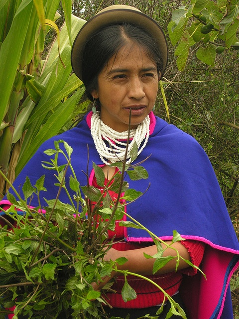 """In Silvia, the Frailejon project center initiated by Ana-Julia, Guanbianos woman, Cauca, Colombia. A Silvia en Colombie Ana-Julia femme Guambiano cultive des plantes médicinales."" © David Ducoin www.tribuducoin.com http://www.flickr.com/photos/tribuducoin/3329135016/in/photostream/"