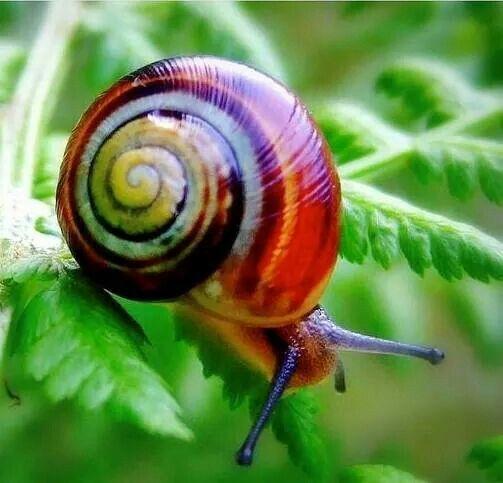 Stunning slow spiral ....