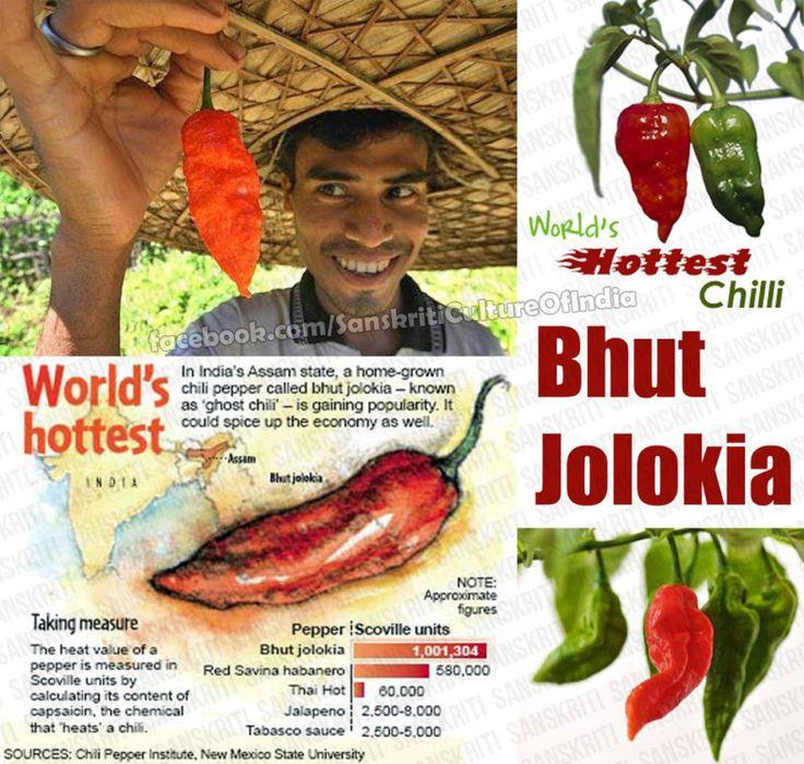 Bhut Jolokia – One of World's Hottest Chilli http://www.sanskritimagazine.com/india/bhut-jolokia-one-of-worlds-hottest-chilli/