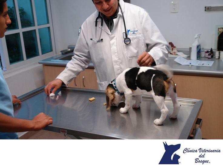 LA MEJOR VETERINARIA DE MÉXICO. Es recomendable que al momento que te regalan, adoptas o compras una mascota, es importante que acudas con un especialista veterinario para que revise su estado de salud y también para que lo vacunen, con ello evitas que a largo plazo pueda contraer alguna enfermedad. En Veterinaria del Bosque contamos con todo el esquema de vacunación recomendo para perros, gatos, cerdos enanos, conejos y hámsters, entre otros animales. #especialistasencuidadodemascotas