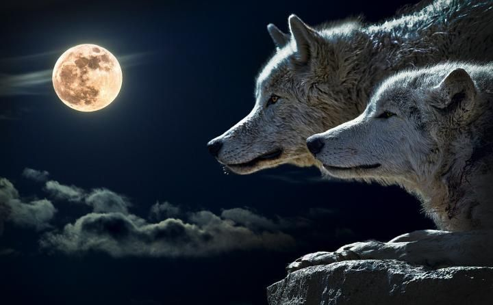 The Wolf Moon is the first full Moon for January -- plus, best days by the Moon, full Moon names, and more.