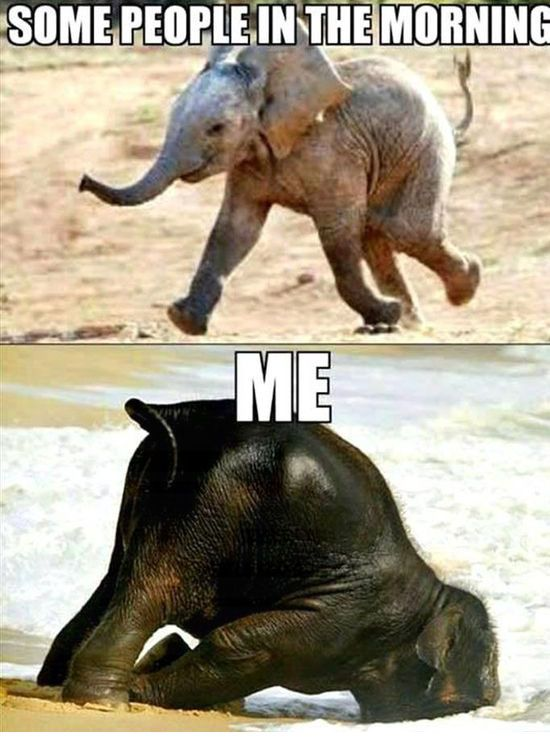 Some People in the Morning - Funny Animals with Captions LOL