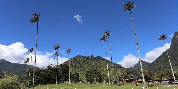 El Valle del Cocora y otras maravillas de Salento