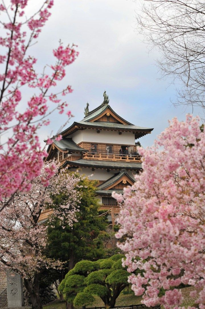 Takashima Castle with Cherry Blossoms