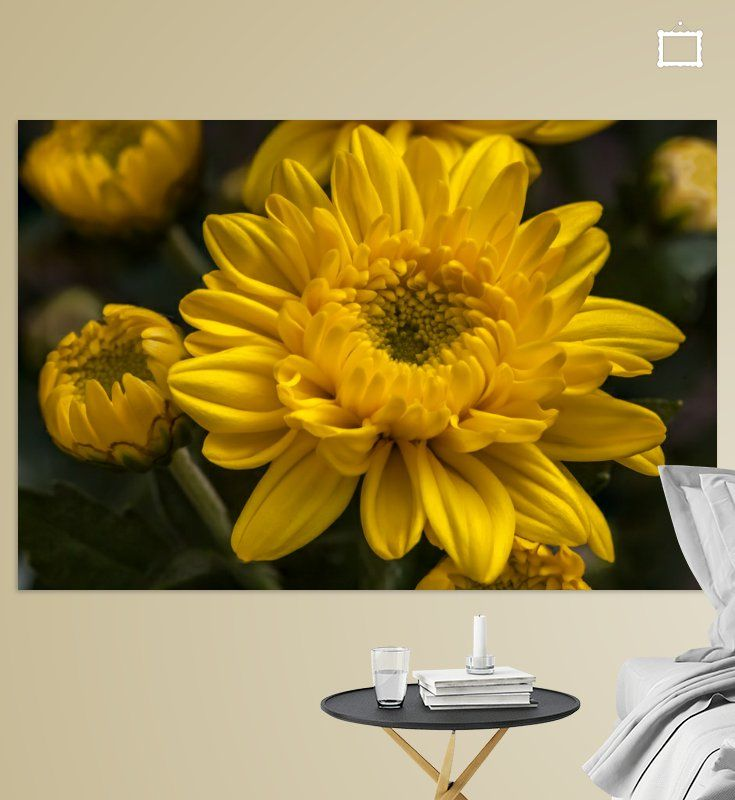 Prachtige foto's en digitale kunst voor aan de muur in huis of op kantoor. De naam chrysant is afgeleid van de oude Griekse woorden Chrysos (goud) en Anthemon (bloem).