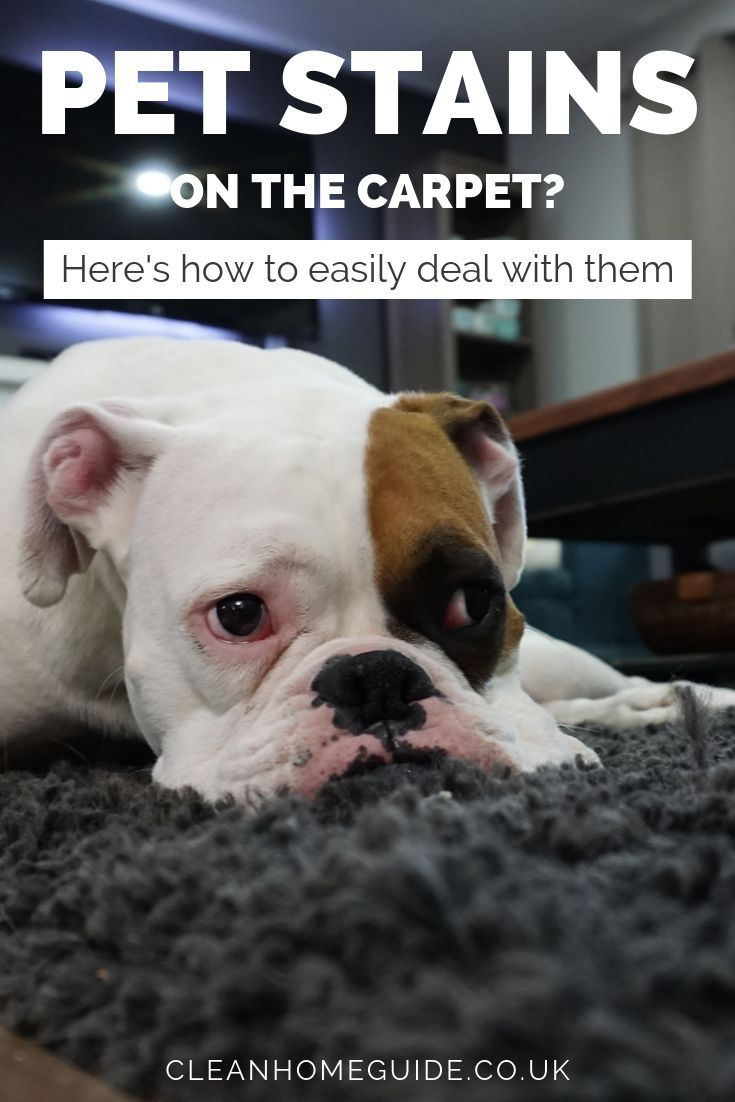 Living With Pets Means You Have To Deal With Stains From Time To Time Follow These Simple Tips To Remove Pet Stains Fr Pee Stains Pet Stains Remove Pet Stains