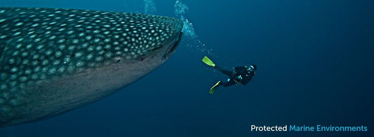 Malpelo Diving | Cocos Diving | Coiba Diving | Coiba Dive Expeditions