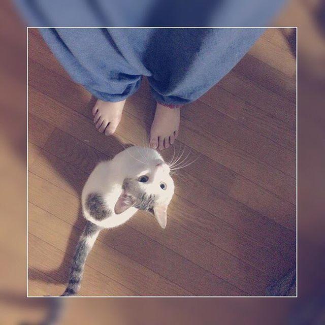 _________oO . . . 甘えん坊こまちゃん 抱っこしてーって訴えてます🐈❤ . たまらなくかわいい😖💕 . . #kawaii#kawaiicat#cat#catstagram#cutecat#catsagram#instagood#猫#猫好き#猫大好き#猫好きさんと繋がりたい#猫部##親バカ#猫バカ#愛猫#激愛#愛くるしい猫#甘えん坊猫#こまちゃん#小町#成長記録#小町記録