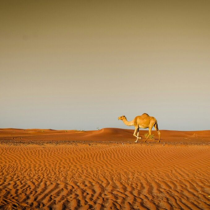 Sharjah Desert #neilmathew_img on instagram