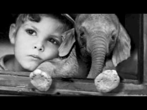 "Jorge Gonzalez ""Mi casa en el árbol"" - YouTube"