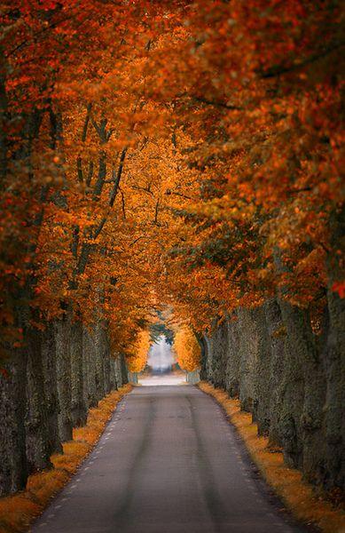 Beautiful autumn path