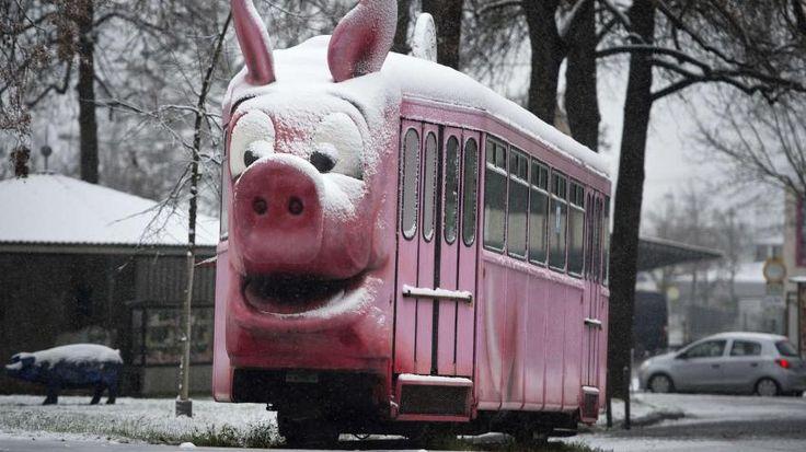 27.12.2014 - Saukalt! Schweinchen-Straßenbahn mit Schnee auf dem Rüssel vor dem örtlichen Schweinemuseum in Stuttgart