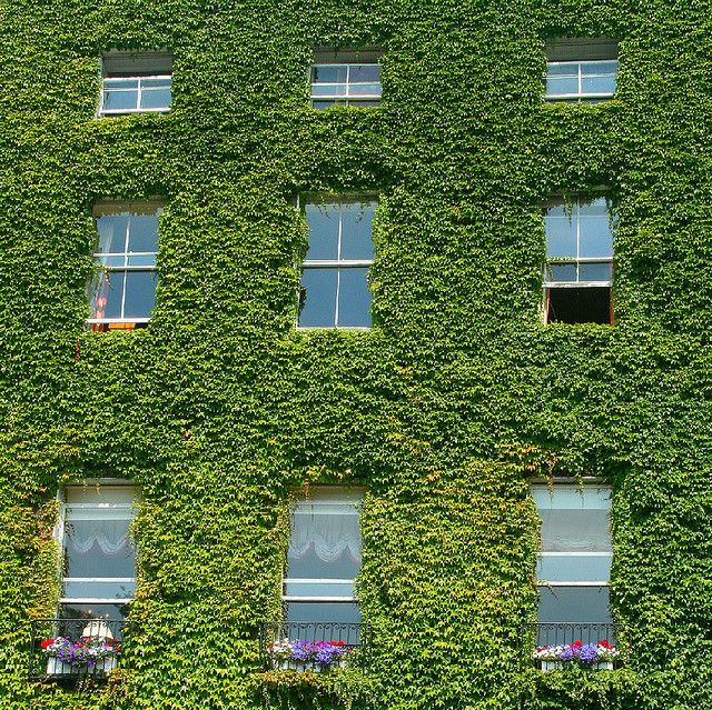 Ivy covered Georgian House pictured in Stephen's Green, Dublin city centre, Ireland in Summer
