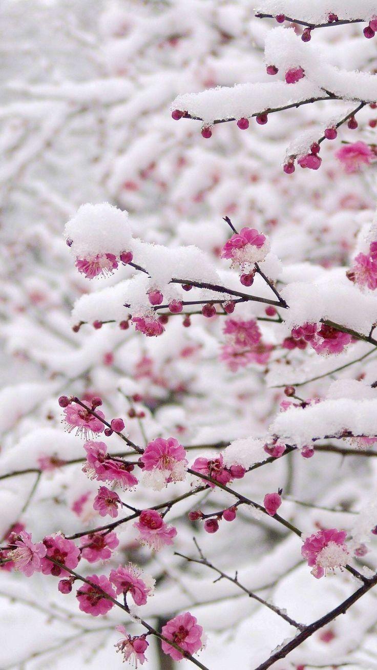 Fondos Fondos De Pantalla De Invierno Papel Pintado Flores