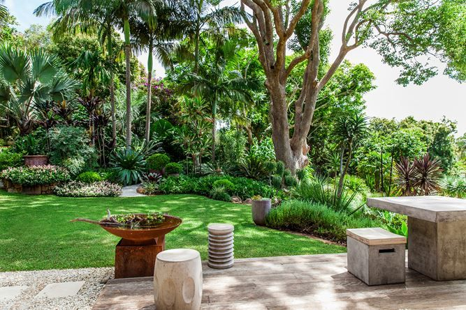 The neat lawn at the centre of the garden is shaded by a sculptural camphor laurel underplanted with shade-loving tropical plants including Brazilian red cloak (*Megaskepasma erythrochlamys*), *Cycas thouarsii* and *Microsorum grossum*.