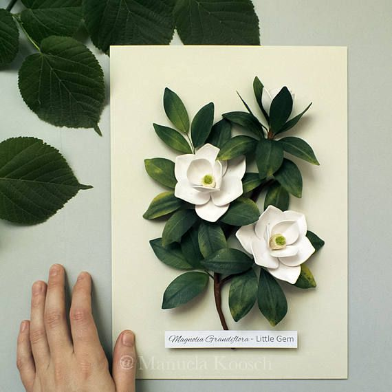 White Magnolia Flowers Botanical Illustration Wall Art White Green Decor Quilled Paper Magnolia Paper Wedding Anniversary Gift For Her Paper Wedding Anniversary Gift Paper Quilling Flowers Quilling Flowers