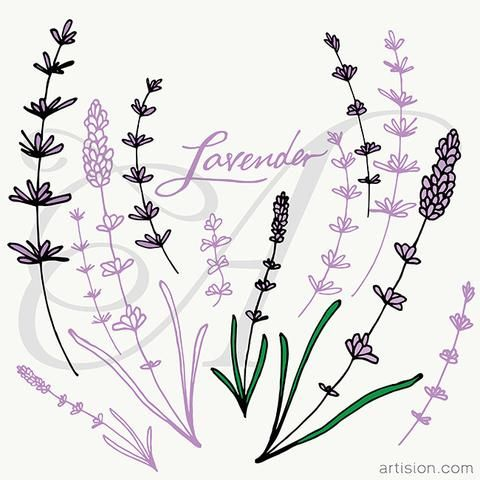 More vector hand drawn graphics for your DIY design projects. Lavender Rosemary Mint.