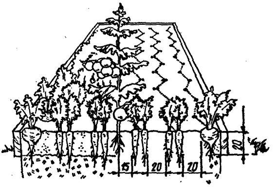 Умный огород в деталях
