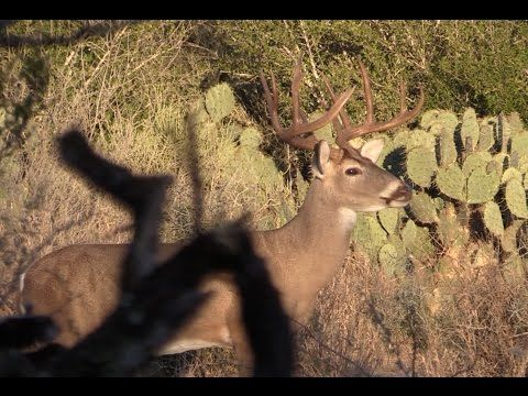 2017 TEXAS WHITETAIL HUNT WITH POPS | EP 2