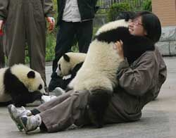 one day i'll hug a panda...mark my words!