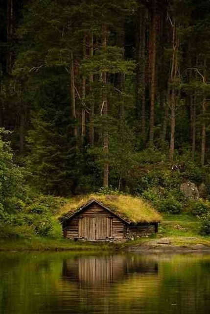 House in the forest   AnOther Loves