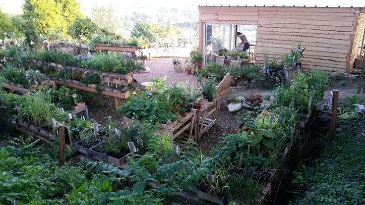 """vente directe et production locale de plantes vivaces """"Les Jardins des Hurlevents """" http://www.plantes-vivaces-hurlevents.com/"""
