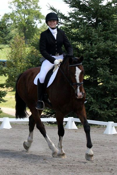 Dressage/Eventer%20Prospect%20For%20Sale%20%2014%20year%20old%2016%923%20Shady%20Maple%20Clyde%20cross%20mare%20for%20sale.%20Originally%20broke%20to%20drive,%20had%20one%20foal,%20and