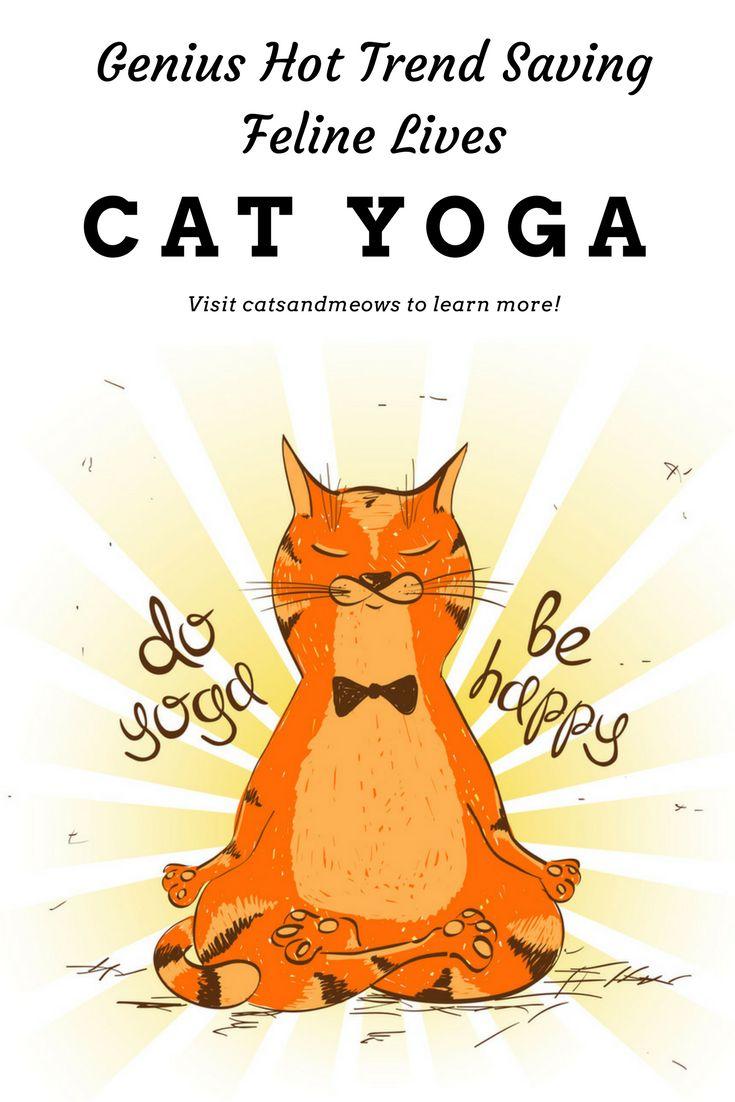 Cat Yoga is the Genius Hot Trend Saving Feline Lives