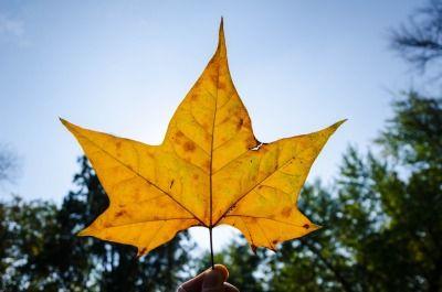 """""""Ha nincs öröm, csak keresni kell: Hiszen még a levél is, amely aláhull a fáról, Mesél a csend vagy a lebegés boldogságáról."""" Eleanor Hodgman Porter"""