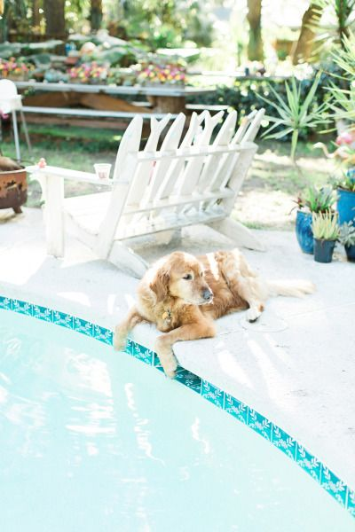 12 best Pool Party images on Pinterest Pool parties, Swimming pool