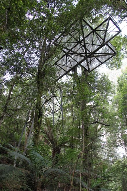 The forests from Harry Potter came to Warburton. The Forest Gallery Walk, and Tree Top walk, running from a short horizontal platform, makes for a wondrous and surreal experience of Myrtle Beech trees, remnants of life from Gwondanaland.