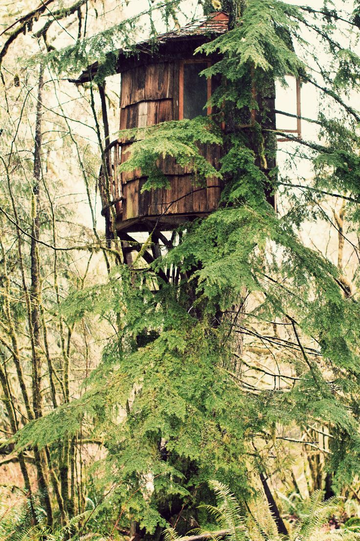 Escape!!!!Forests House, Trees Forts, Around The House, Dreams House, Green Life, Trees House, Trees Home, Into The Wood, Recycle Wood