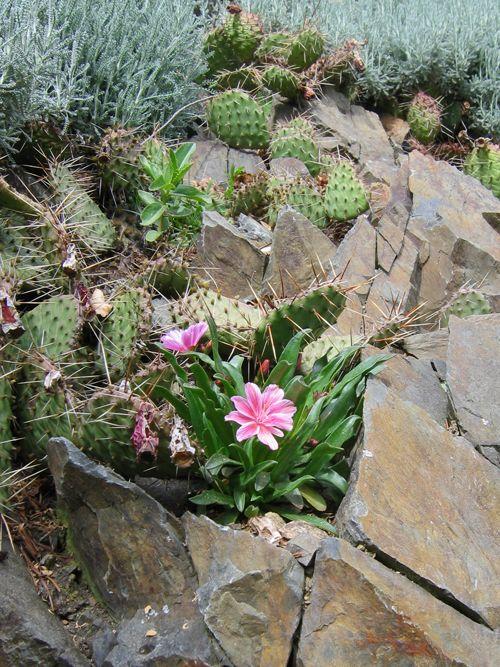Növényekről, kertészkedésről nem csak kertben, könyvekről, tanácsadás