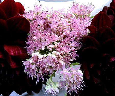 Windlicht - tafeldecoratie met een bloemstuk rond het windlicht - bloemschikken met dahlia's en bloemschikmaterialen