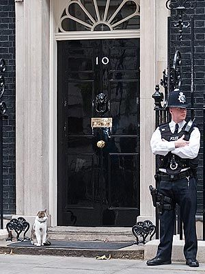 Larry, the Downing Street cat,keep security    tight outside 10 Downing Street. You watch that side I am going to watch over this side, surely no mouse won't pass by us!