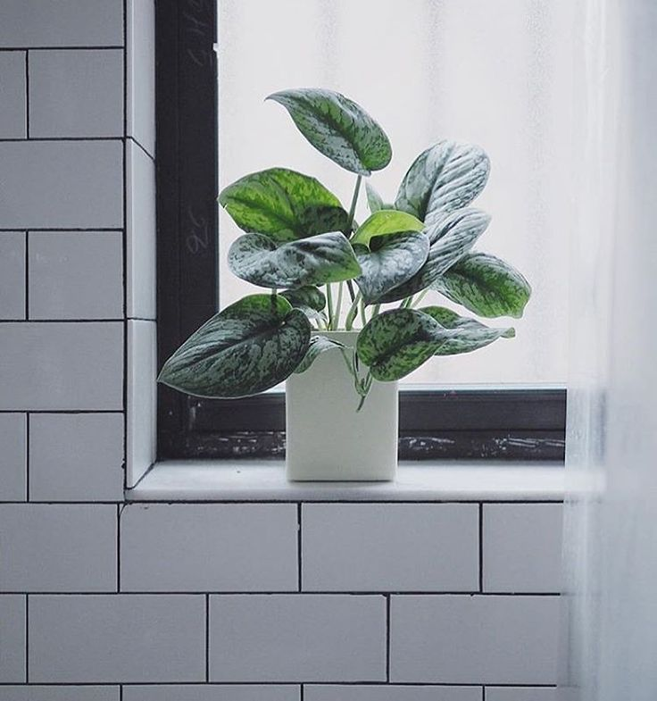 Find This Pin And More On |Bathroom Plants| By Thesillnyc.
