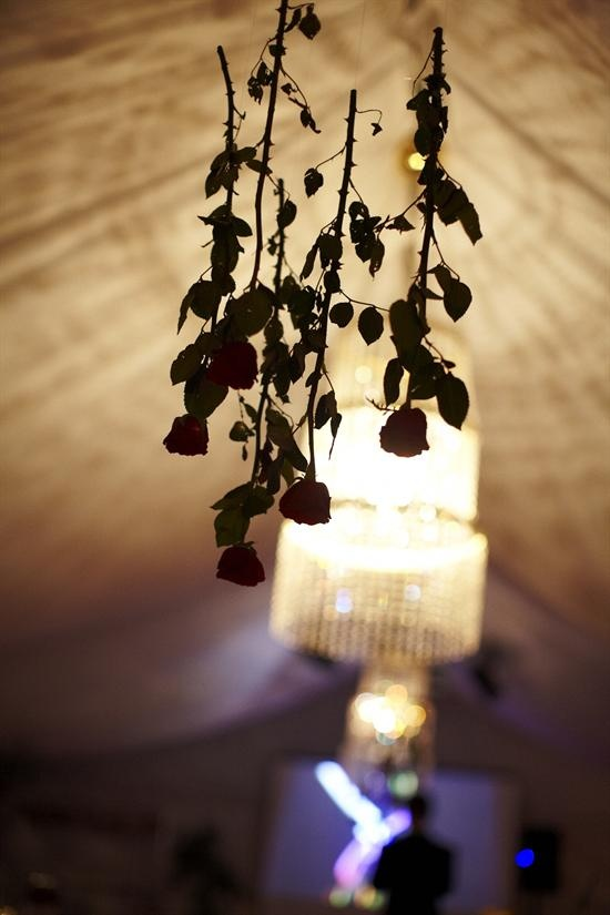 Red roses hanging from the ceiling