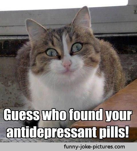 Cat Memes | ... who found your Antidepressant Pills Cat Meme Picture Image Photo Joke