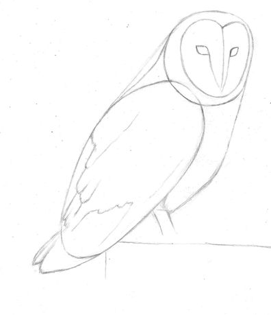 how to draw a barn owl step 3
