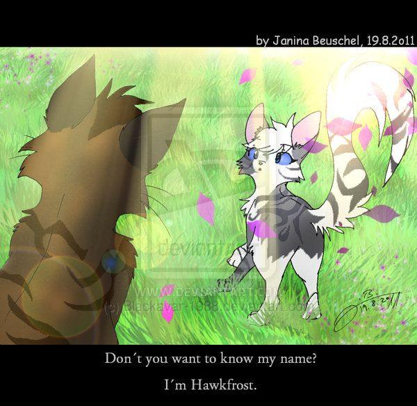Hawkfrost And Ivypaw