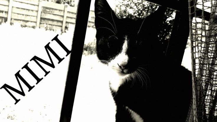 Fly kitty