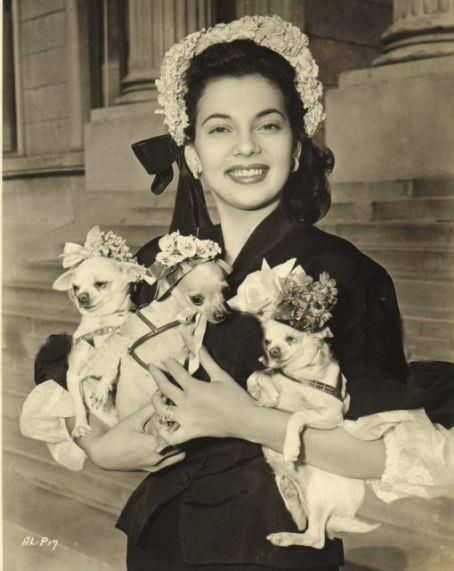 Mrs. Xavier Cugat & a trio of bonneted chi's #chihuahua #chihuahuatypes #chihuahuadogs