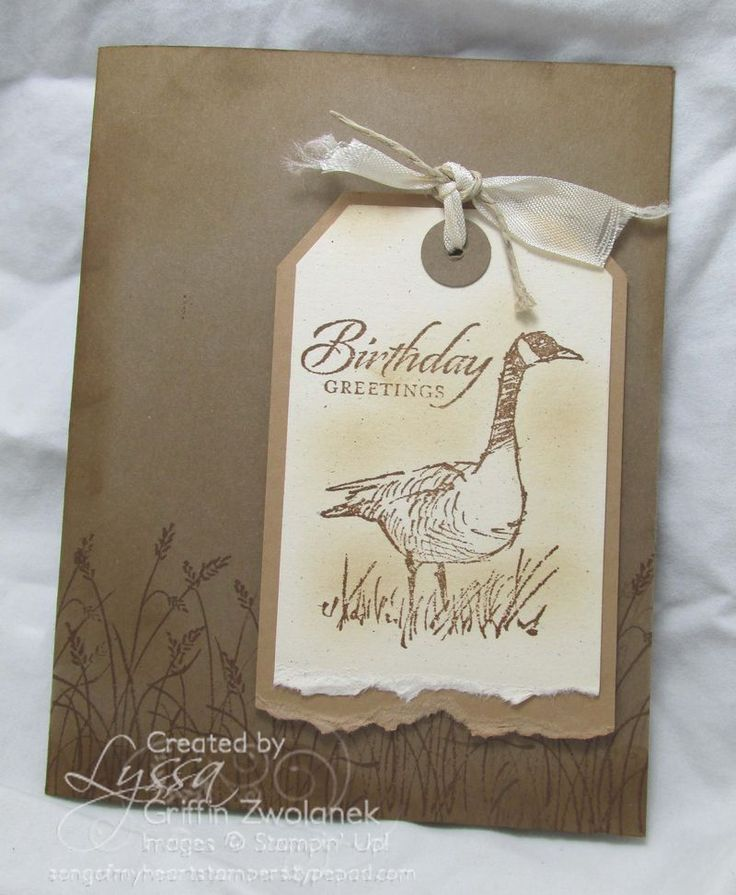 Wetlands masculine cards