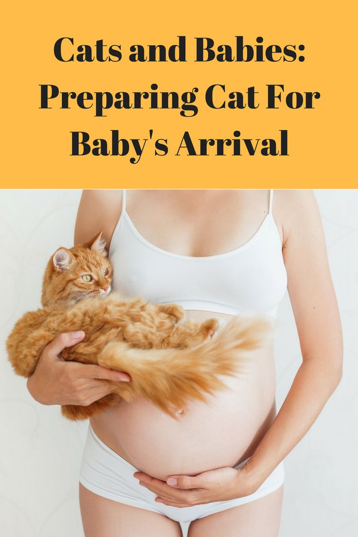 Bringing home a new baby can be very stressful for your cat. Cats and babies can peacefully co-exist if you prepare your cat: #cats