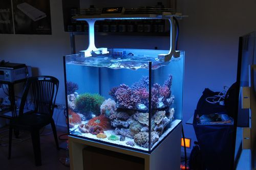 Xaqua nano reef led reef aquarium light aquariums for Aquarium recifal nano